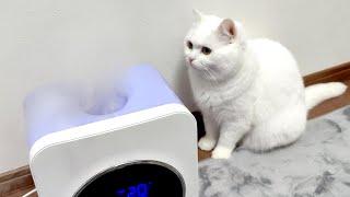 ドライアイス並のミストに困惑する猫!