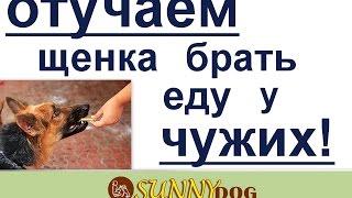отучение щенка брать еду у чужих. как научить щенка не брать еду у  людей(, 2017-03-27T08:51:09.000Z)