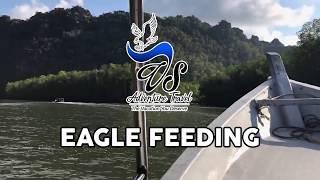 VS Adventure Tour & Travel - Eagle Feeding