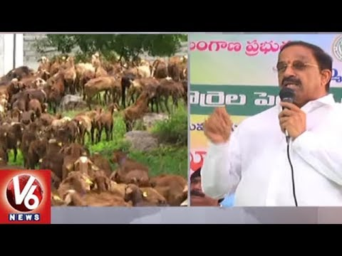 Minister Thummala Launches Sheep Distribution Scheme In Khammam District || V6 News