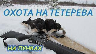 Охота на тетерева зимой на лунках видео