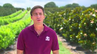 $72m Agribusiness Cherry Lake Tree Farm Selects Acumatica