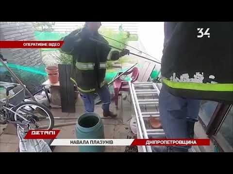 34 телеканал: В Днепре возле супермаркета нашли змею