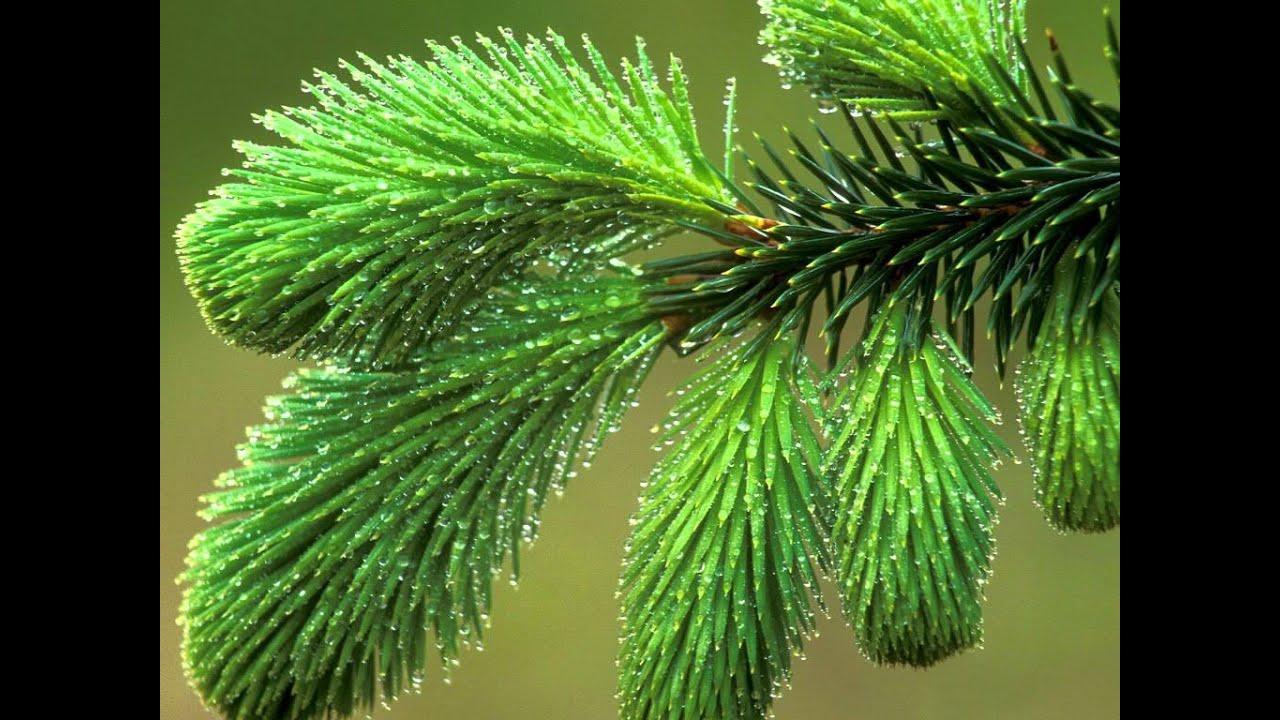Катепал зеленый цвет