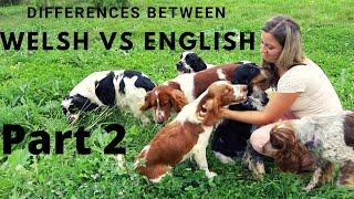 Welsh Springer Spaniel vs English Springer Spaniel