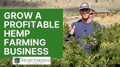 My Hemp Farming Story - How to start a profitable CBD hemp farm in 2020