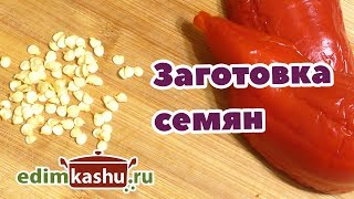Как заготовить собственные Семена Перцев/ Выращиваем и готовим