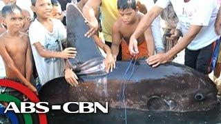 Sunfish napadpad sa tabing-dagat