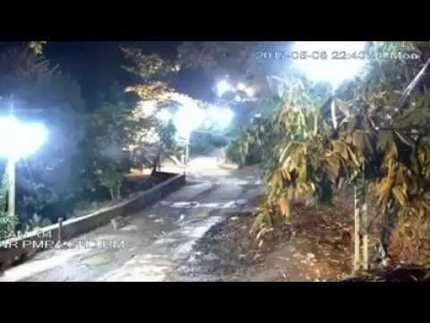 Tiger in Sabarimala Temple !!!!!