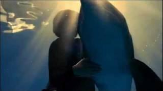 ~  Dolphin  Tale  ~  (winter