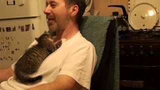 Кошка - это ДИКИЙ зверь