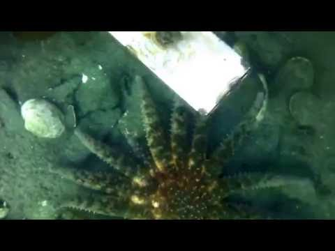Searching For a Drill Bit With Underwater Camera