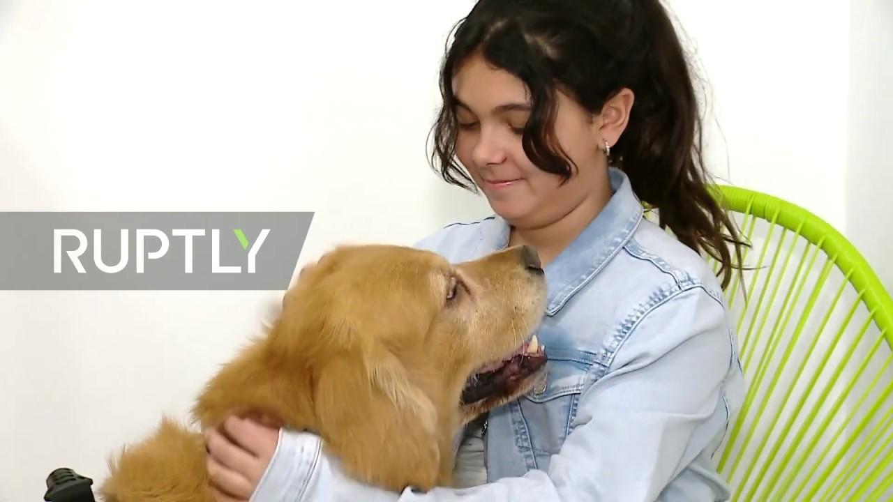 Αποτέλεσμα εικόνας για τιταν σκυλος για κακοποιημενα παιδια