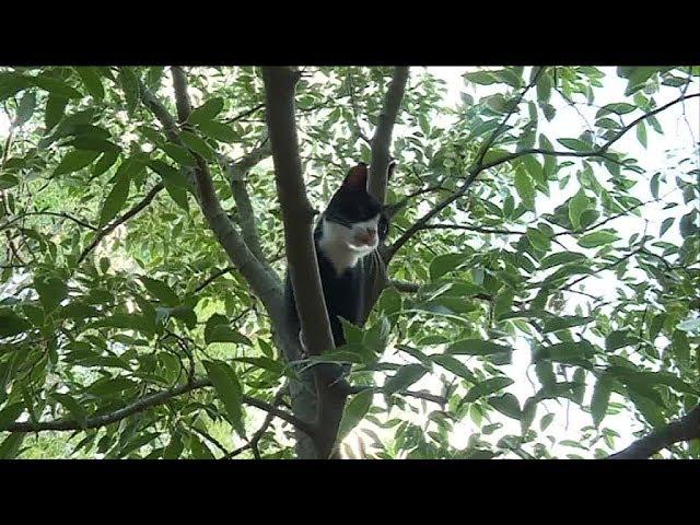Plus de 5.000 chats errants à Marseille, comment en est-on arrivé là ?