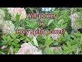 September 20th Prayer | Will-power or Holy Spirit Power? | Inspire me!| Lady Wisdom Speaks