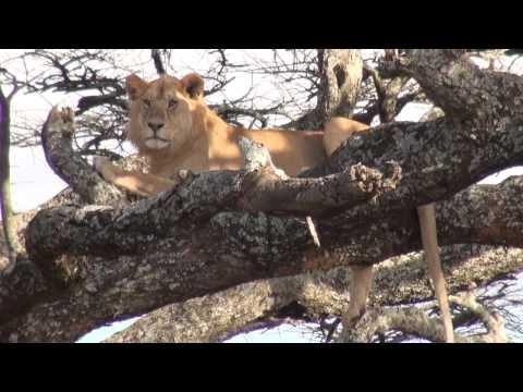 African Safari on the Serengeti Plains