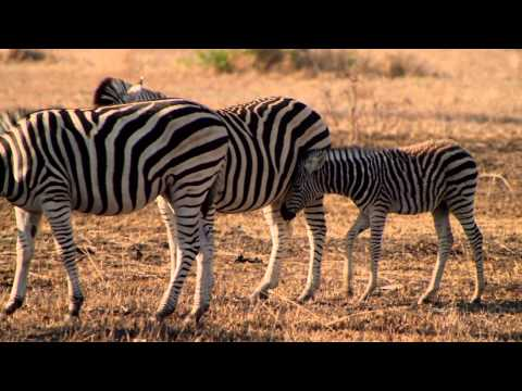 Go on a Big 5 Game Drive in South Africa