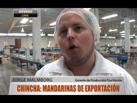 Chincha: mandarinas de exportación