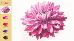 Basic Flower Watercolor - Dahlia (sketch & color mixing, Arches) NAMIL ART