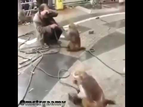 Kürtçe komik maymunlar izlemeden gecme
