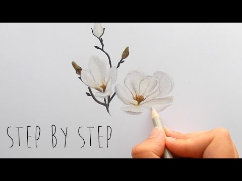 Step by Step   How to draw, color a white Magnolia flower with colored pencils   Emmy Kalia