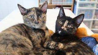 When Jugg Met Zig Zag (2 Cute Kittens)