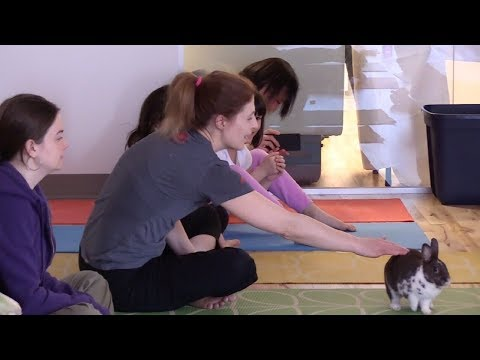 Yoga with Bunnies from The Toronto Humane Society