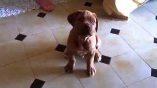 Il Mio Piccolo Caligola!!!