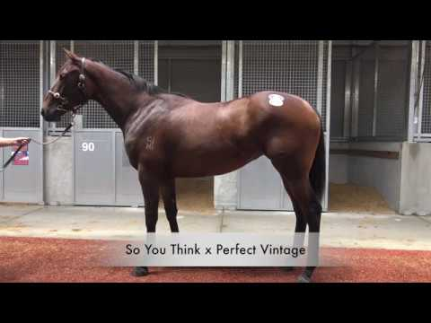 2017 Gold Coast Magic Millions So You Think x Perfect Vintage - Mitchell Beer