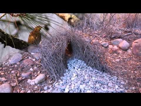 Необычные гнезда