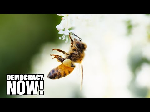 """""""The Pollinators"""": New Film Shows How Decline Of Bee Colonies Could Mean Collapse Of Food Chain"""