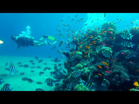 Israel || EILAT || Red Sea Diving