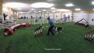 Agility By Alpha Dogs