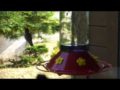 Hummingbirds eating from new feederwith perch!