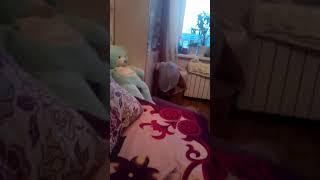 Простите котенок уронил телефон он подумал что я играю и видео закончилось простите