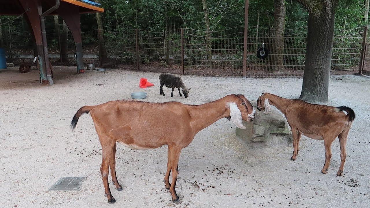 Animal Kingdom Animal Planet Animal World Free Animal: What's New At Disney's Animal Kingdom!
