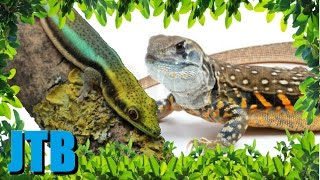 5 Stunning Lizards YOU Can Own!
