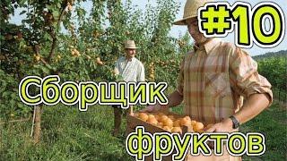 Сборщик фруктов - Samp [Diamond rp] #10