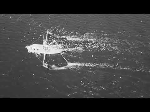 Shrimp Boat Charleston