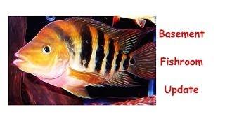 Basement Fishroom Update May 2014
