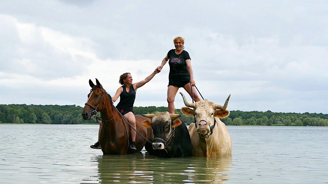 Baignade tous ensemble au Lac de la Forêt d'Orient