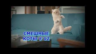 Приколы с кошками и котами #12. Подборка смешных и интересных видео с котиками и кошечками 2017