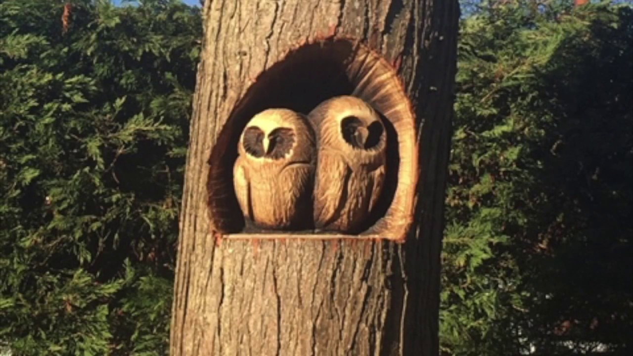 Annandale owls chainsaw carving youtube