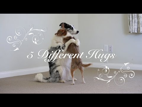 Dog Friends Teach How To Hug