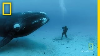 Close Encounters of the Giant Kind | National Geographic thumbnail