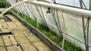 AAAP Aquaponics Community Farming 4