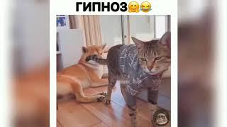 #7 Очень смешные приколы с животными 2019 ржака до...