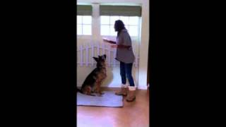 Dog Training 101: Dog Tricks: Teaching Paw