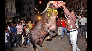 Buffalo dance || Diwali sadar mala festival celebration 2017 || Hyderabad.
