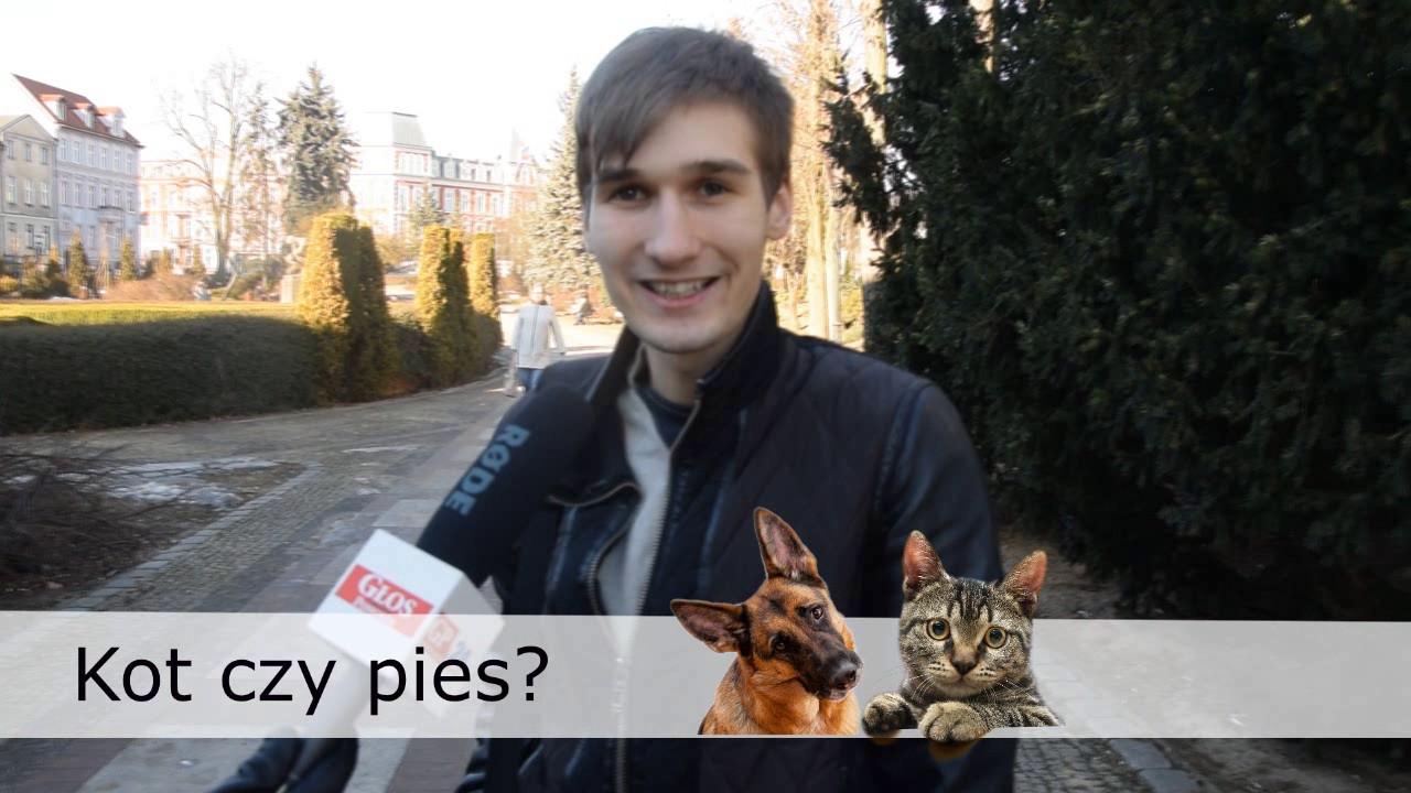 światowy Dzień Kota Sonda Gp24 Kot Czy Pies Jak Opowiadali